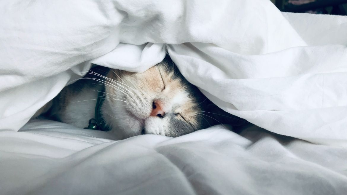A cat napping underneath a duvet