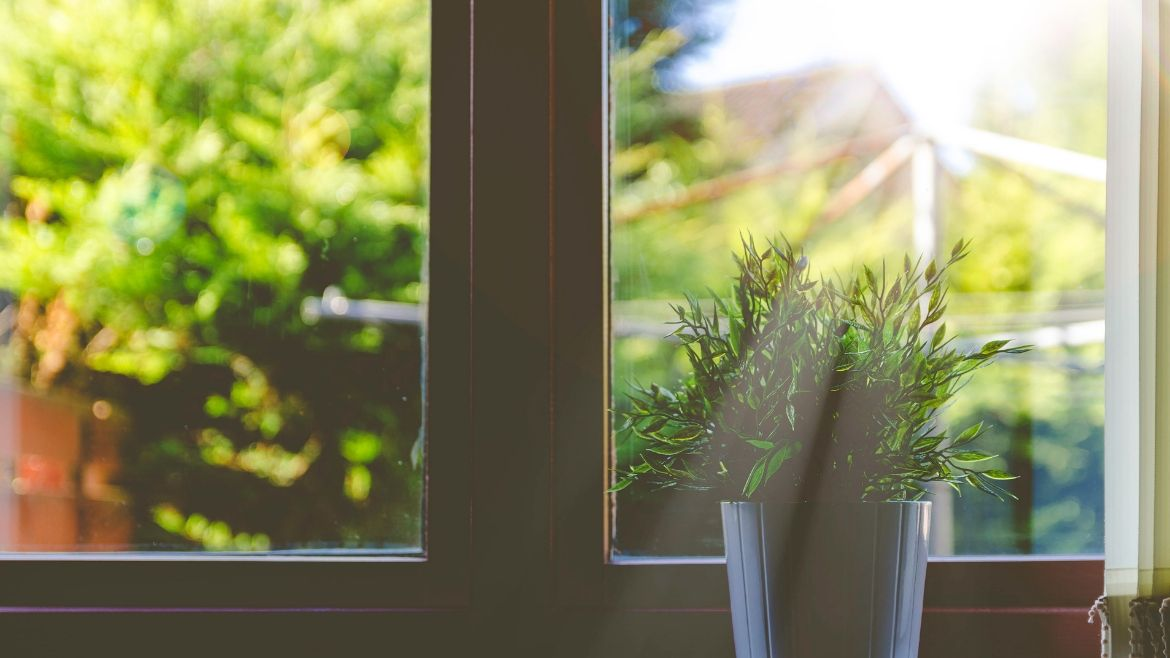 Plant and open window